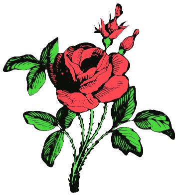 rose/flower
