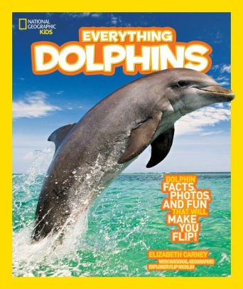 Everything Dolphins.jpg